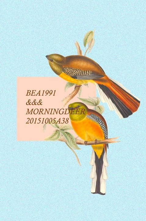 bea-morningdeer
